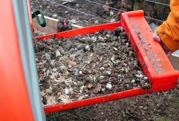 Правила удобрения огурцов куриным пометом