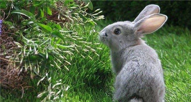 Чем и как кормить кроликов: советы животноводов