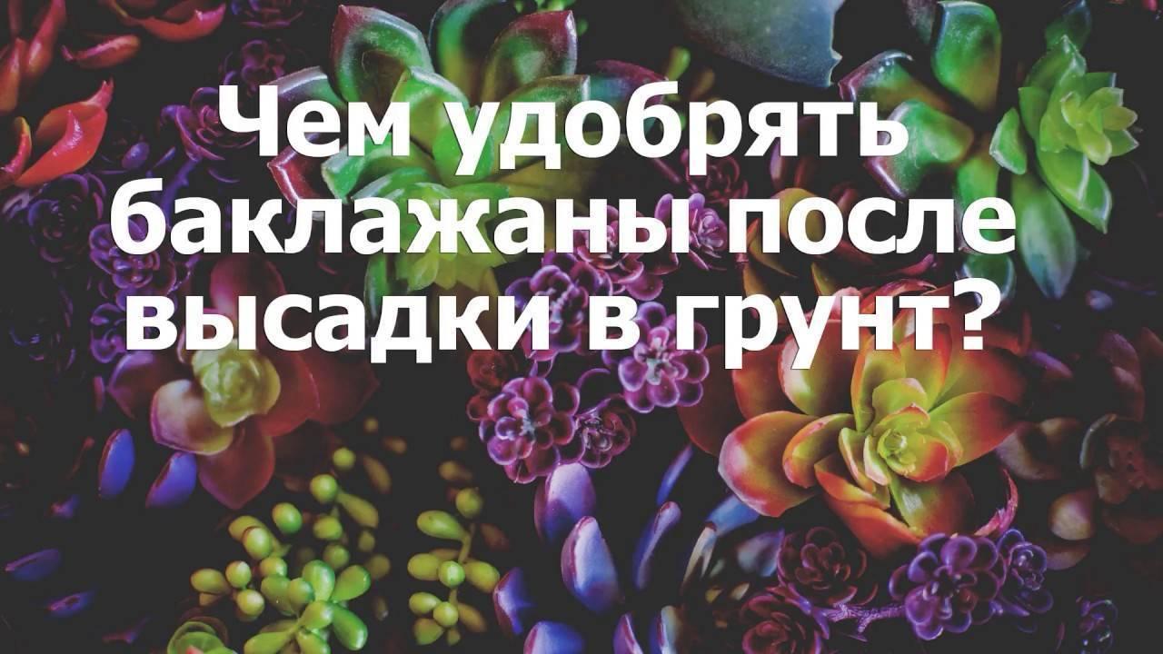 ✅ чем подкармливать баклажаны после высадки в теплицу: удобрения для хорошего урожая - tehnomir32.ru