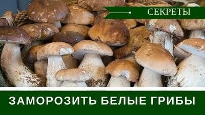 Белый гриб: заморозка на зиму