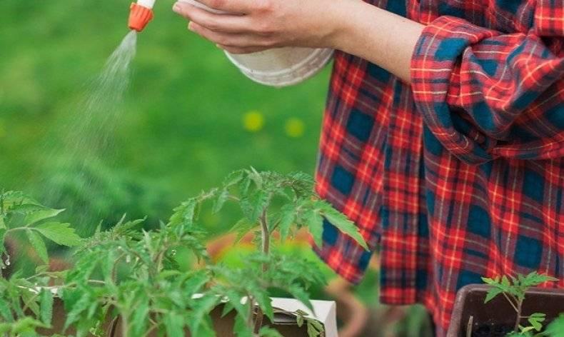 Инсектицид калипсо - инструкция, механизм действия и нормы расхода