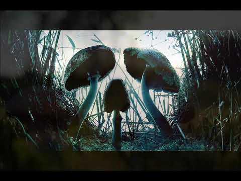 Какие грибы можно есть сырыми: описание и названия