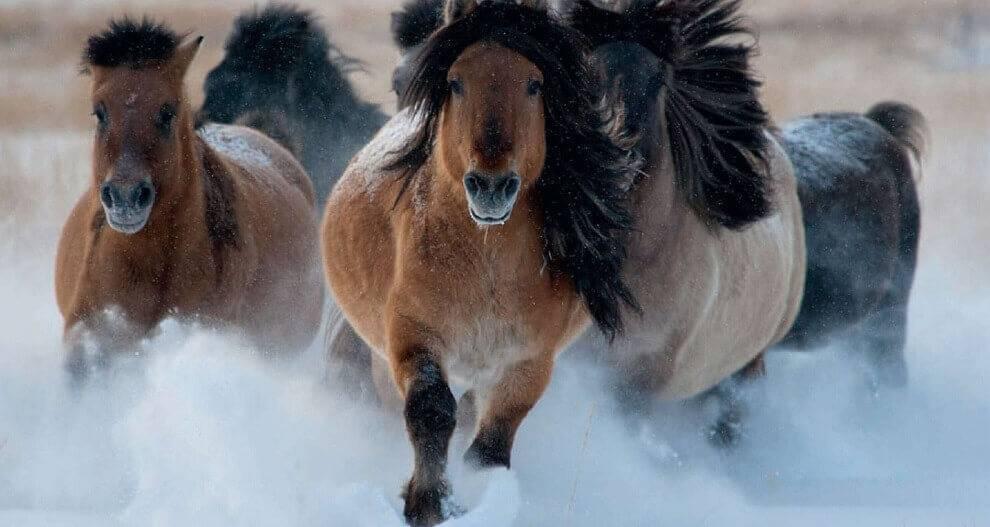 Болезни органов размножения.. болезни лошадей