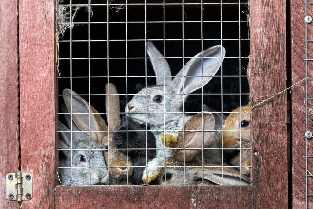 Разведение кроликов как бизнес в домашних условиях