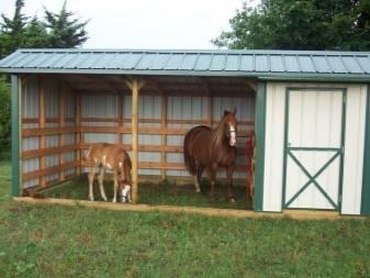 Стойла: размеры денника для лошади. что это такое? летние постройки для коня и другие стойла в конюшне, конские кормушки для телят внутри стойла
