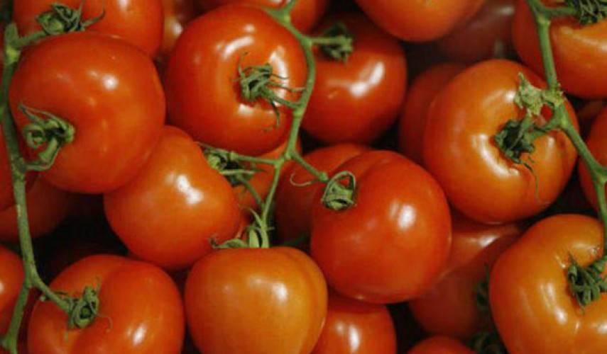 Томат марьина роща (f1): отзывы, фото, урожайность и секреты правильного ухода за гибридом