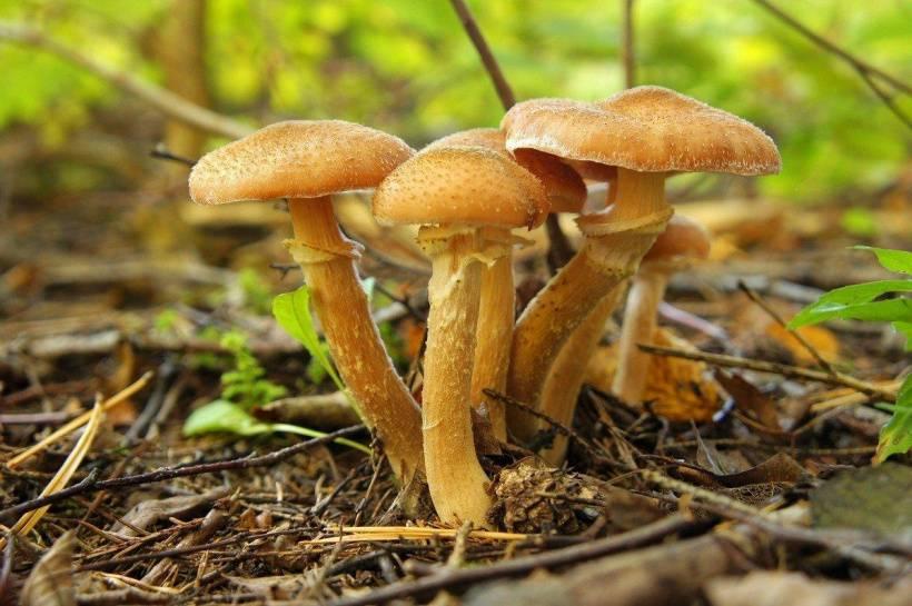 Грибы чеховского района 2021 когда и где собирать, сезоны и грибные места