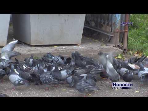 Известные болезни голубей и их лечение