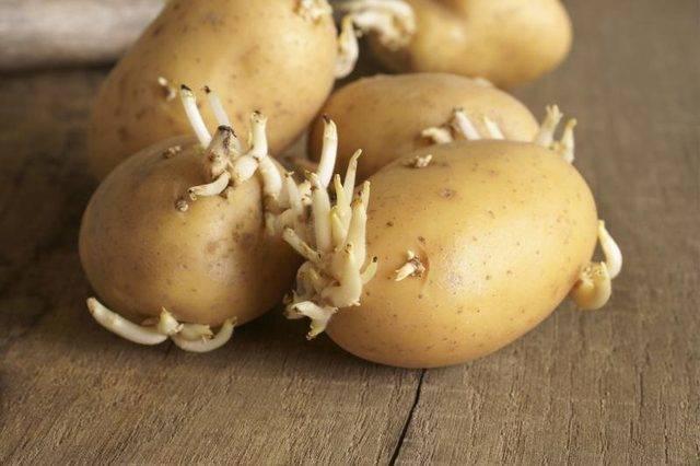 Можно ли есть проросшую картошку? чем вреден проросший картофель?