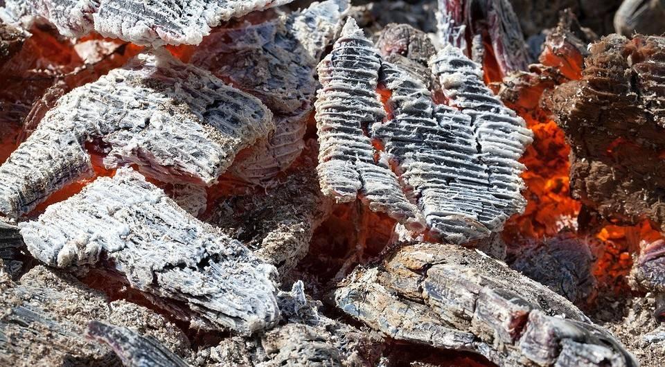 5 способов применения древесной золы на даче