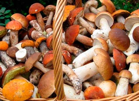 Какие грибы ростовской области можно употреблять в пищу?