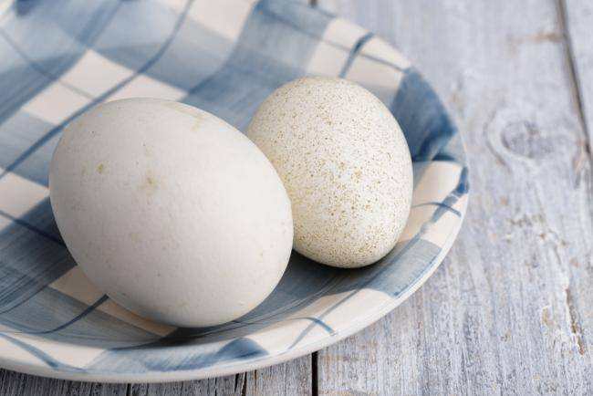 Польза гусиных яиц для детей. можно ли есть гусиные яйца. для приготовления каких блюд подходит