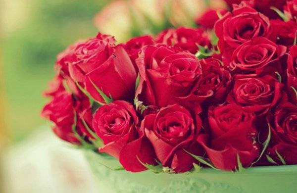 Голландские розы: выращивание, описание