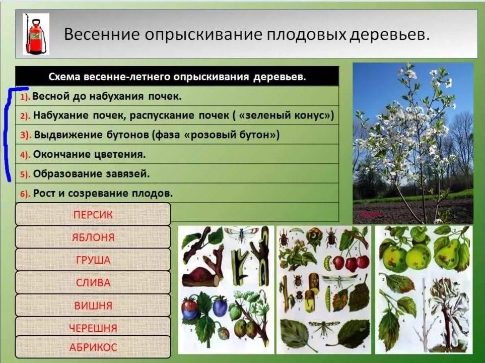 Обработка винограда весной от болезней и вредителей: схема, сроки