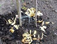 Подкормка яблонь осенью удобрениями – подходящие минеральные добавки и народные рецепты