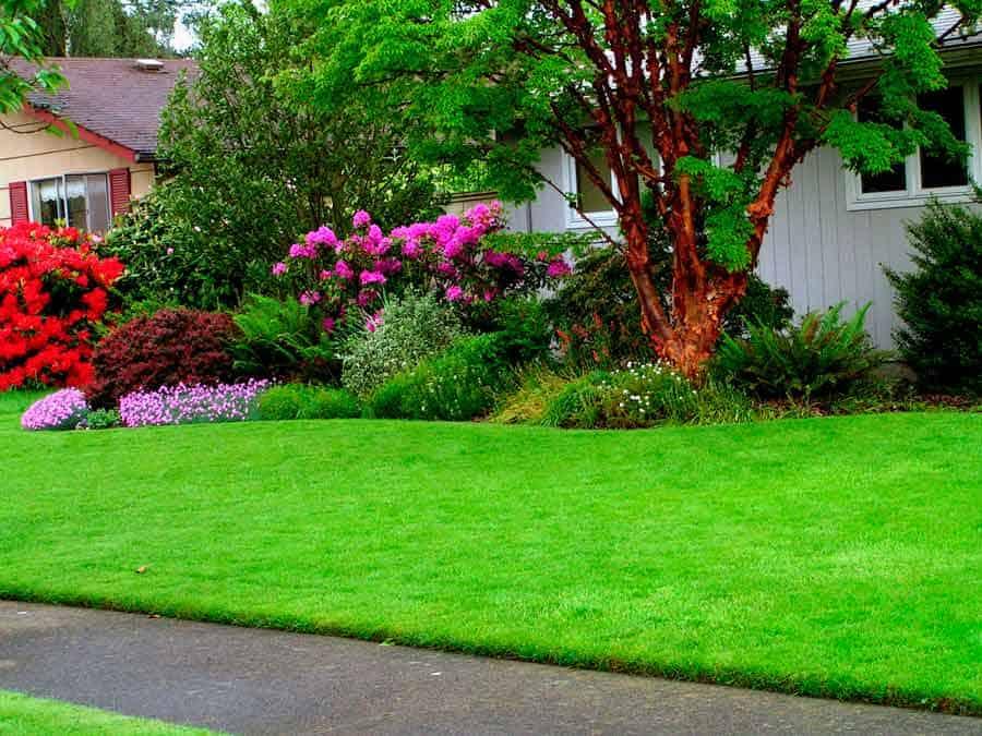 Газон на даче своими руками пошаговая инструкция: как правильно посадить (посеять) газонную траву на участке, уход за газоном