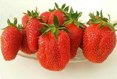 Клубника эльвира: описание сорта, особенности выращивания и ухода, отзывы