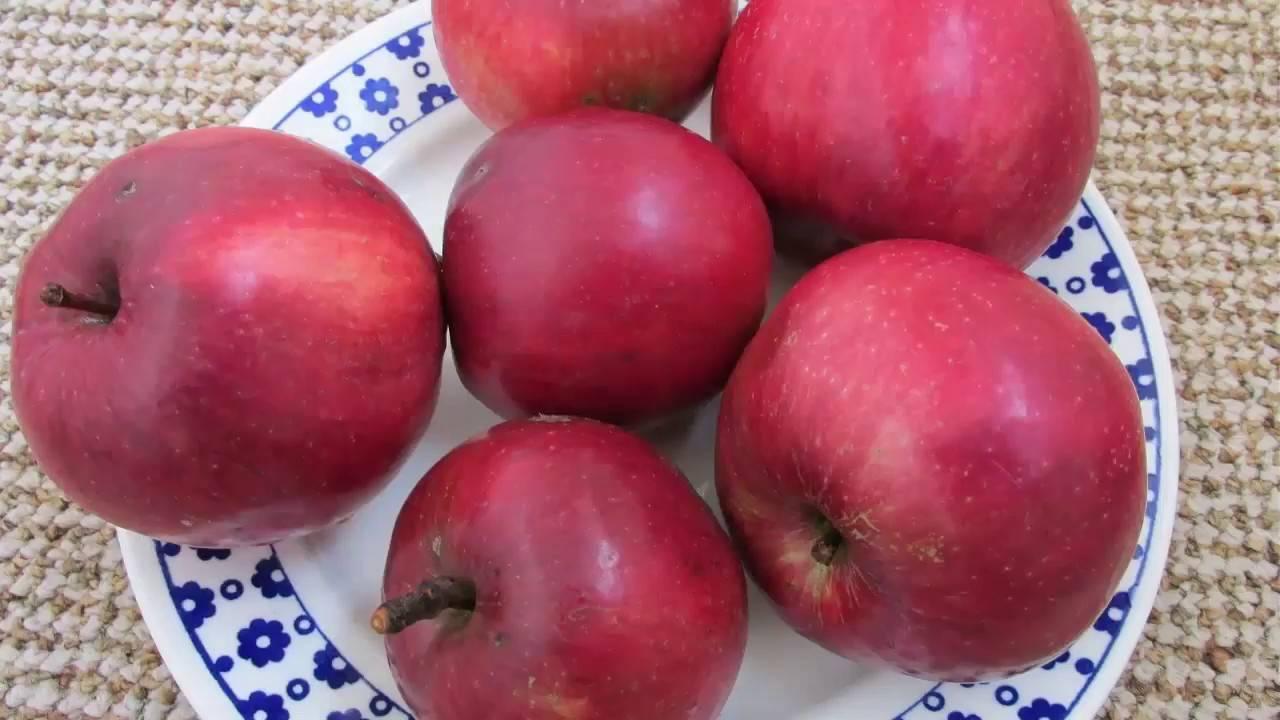 Яблоня малиновка: описание сорта, фото, особенности ухода