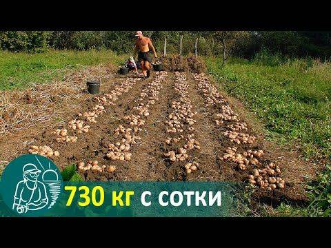 Посадка картофеля по китайской технологии видео