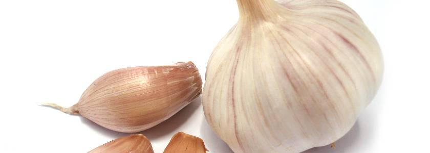 Как выращивать и ухаживать за чесноком в открытом грунте, чтобы был хороший урожай