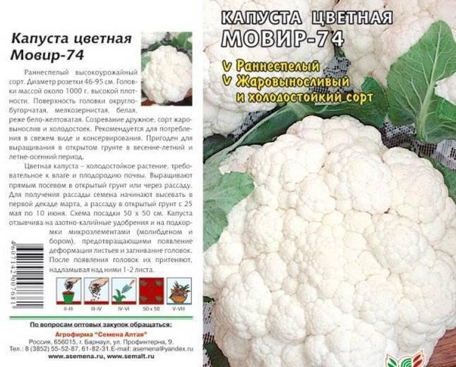 Лучшие и самые продуктивные сорта цветной капусты для открытого грунта
