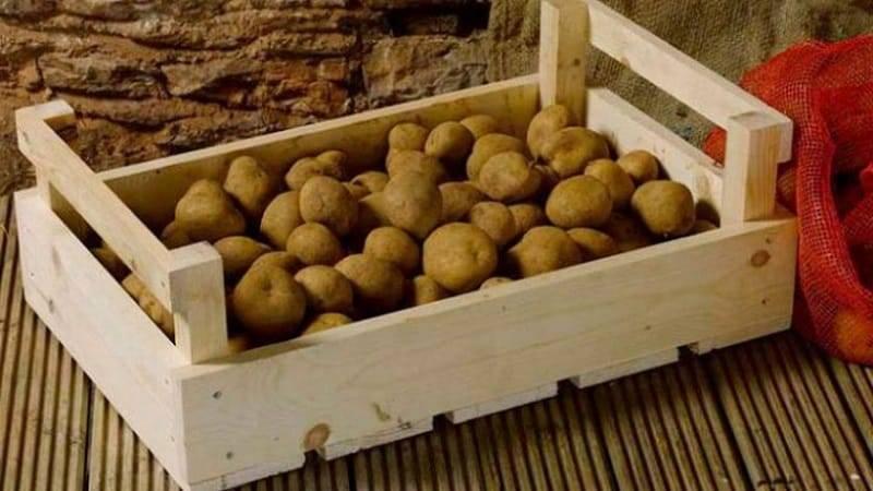 При какой температуре замерзает картошка на балконе. хранение картофеля на балконе зимой   дачная жизнь