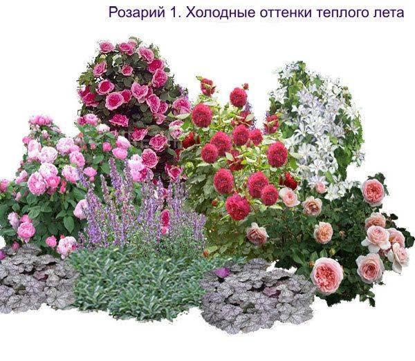 Розарий на даче: схемы посадки, выращивание и уход, фото