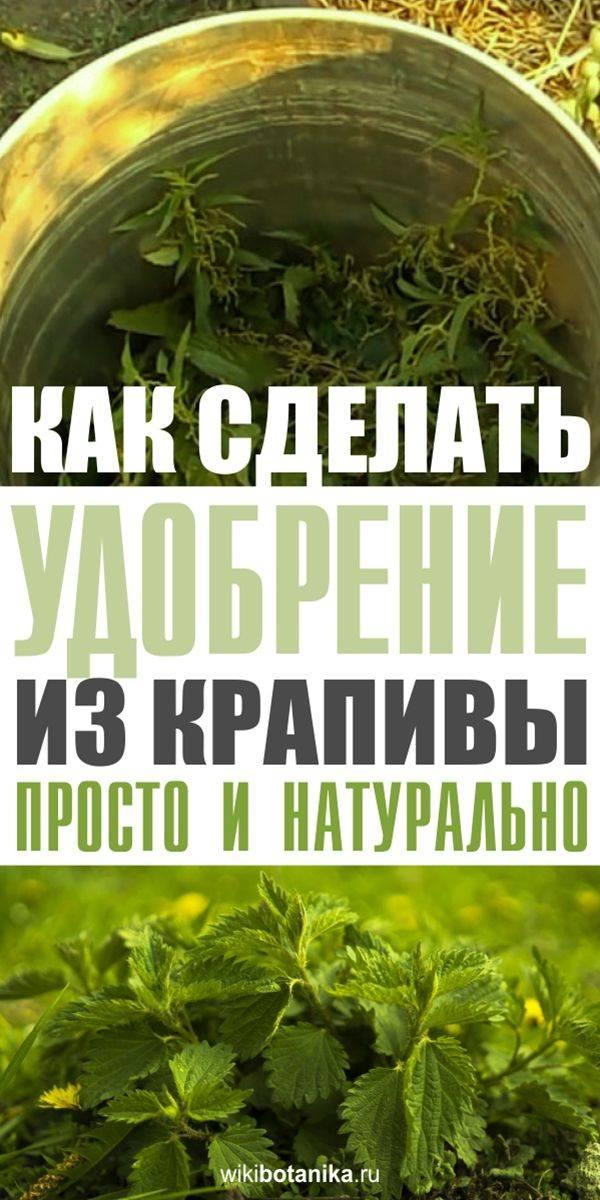 Применение настоя крапивы как удобрения для огорода: способы приготовления