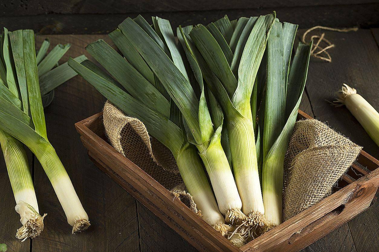 Все о выращивании лука-порея через рассаду