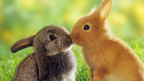 Инфекционный ринит у кроликов: причины возникновения и методы лечения