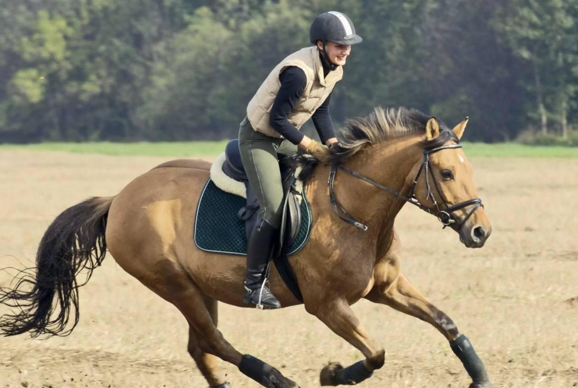 Лошадиный галоп