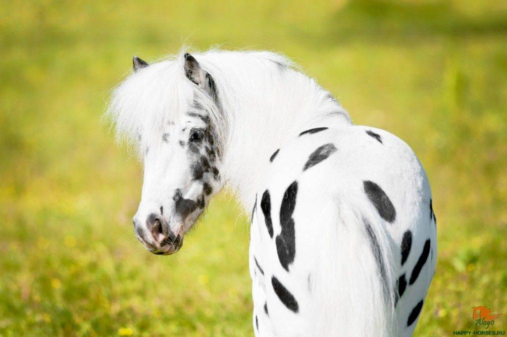 My little pony, полный список персонажей