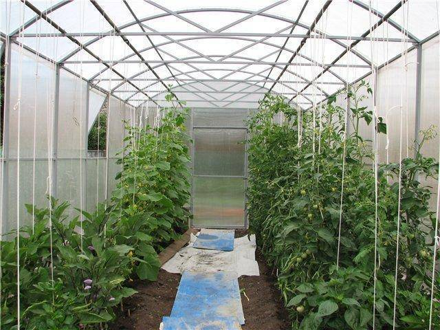 Выращивание помидоров в парнике > видео + фото процессов
