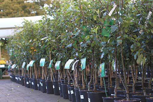 Сажаем яблоню весной – особенности и рекомендации, пошаговое руководство