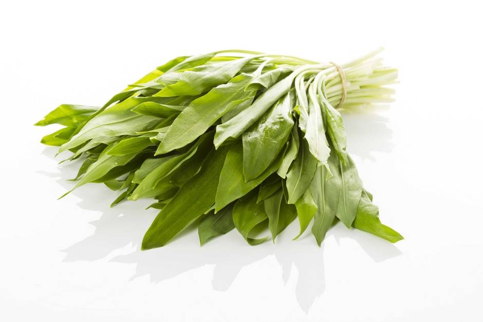 Черемша: выращивание из семян