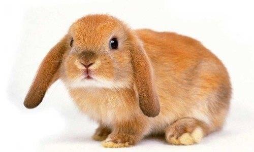 Почему кролик грызет клетку и что делать: чем обработать и дезинфицировать