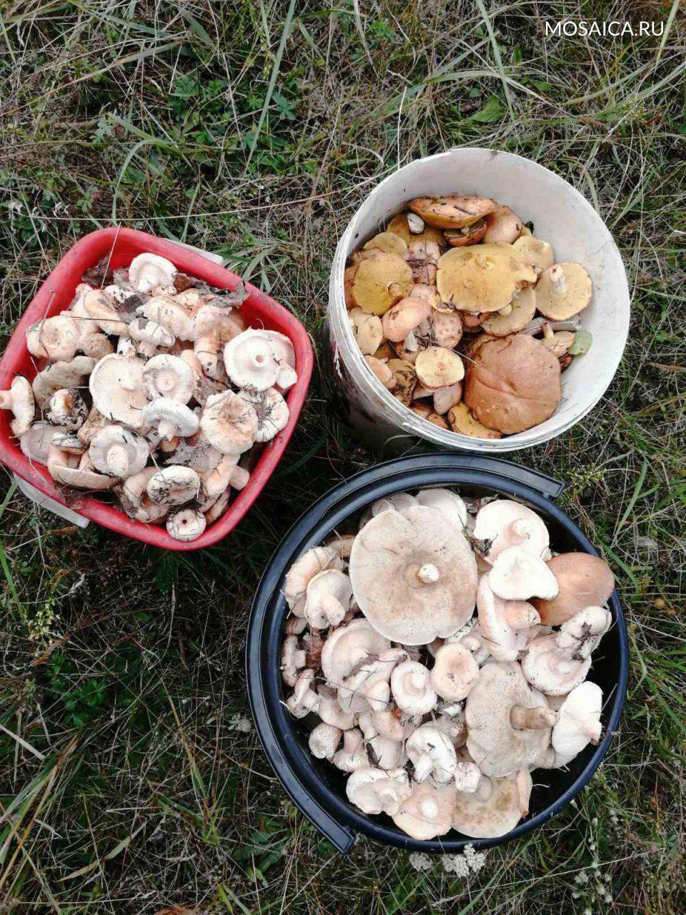 Грибы нижегородской области 2021: когда и где собирать, сезоны и грибные места