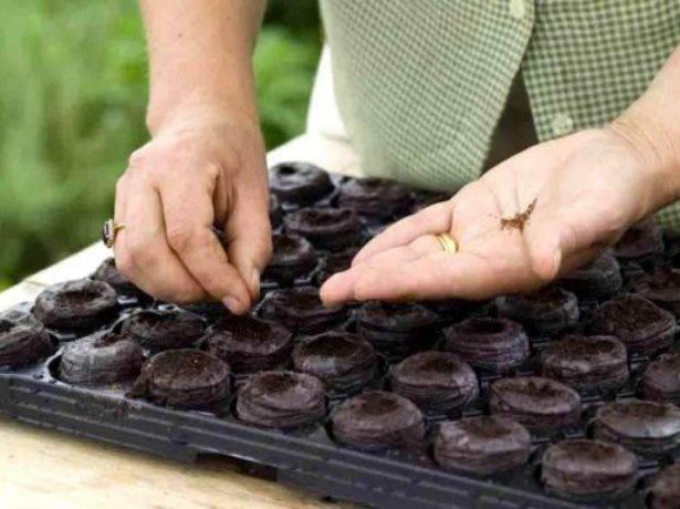 Торфяные таблетки для рассады перца: описание, как пользоваться, остальные емкости