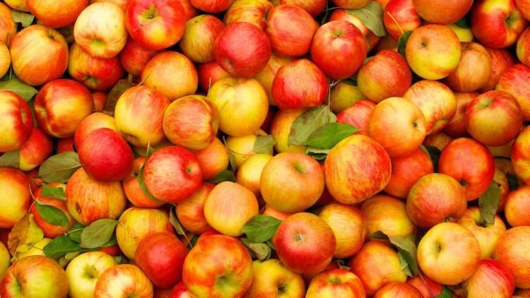Сорта яблонь для средней полосы россии: фото с описанием лучших ранних, поздних осенних и зимних