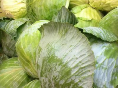 Как хранить капусту зимой, чтобы она осталась свежей и сочной до весны