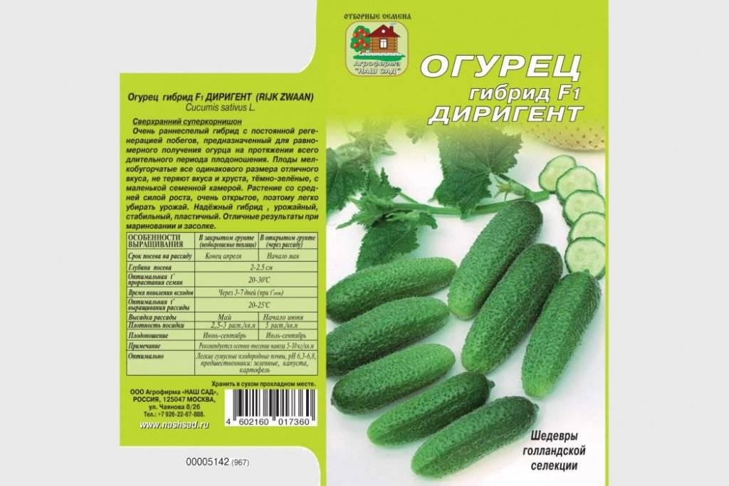 Огурец зена f1: описание и урожайность сорта, отзывы, фото