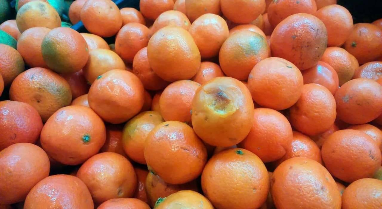 Абхазские и марокканские мандарины — что полезнее
