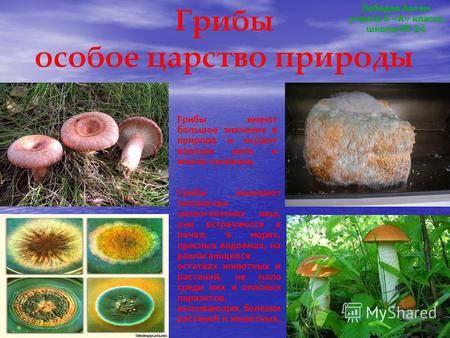 Какую роль в экосистеме играют грибы? значение грибов в природе