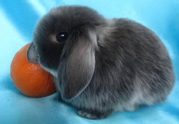 Почему декоративный кролик кусается, что делать, если питомец укусил до крови
