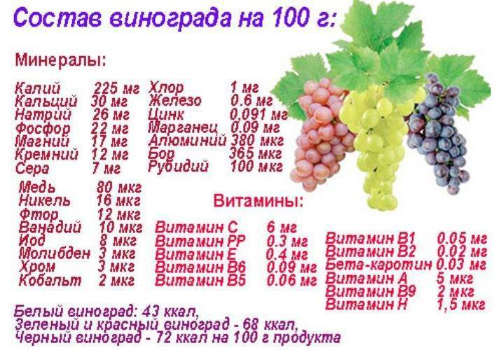 Сколько калорий в винограде зеленом. польза винограда и его виды | здоровое питание