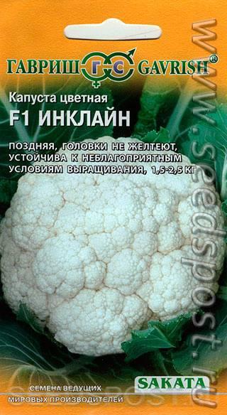 Цветная капуста: сорта, посадка, выращивание и уход, хранение. фото — ботаничка.ru