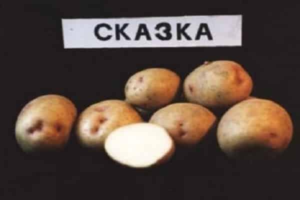 Картофель невский – описание сорта, фото, отзывы