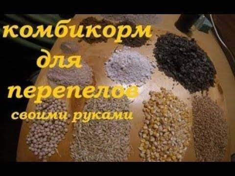 Корм для перепелов: рецепты комбикорма для несушек и перепелов