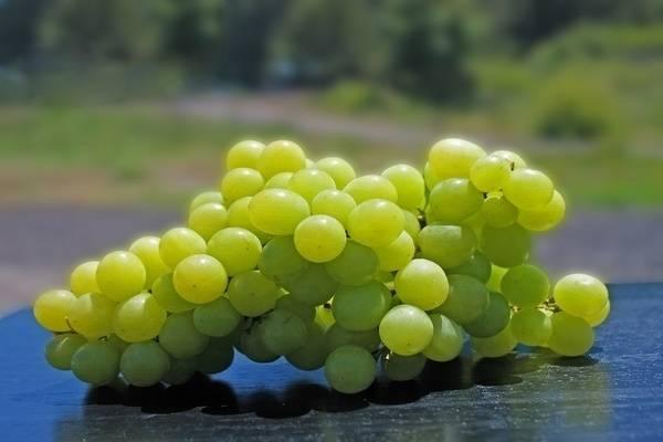 Зеленые операции на виноградных кустах