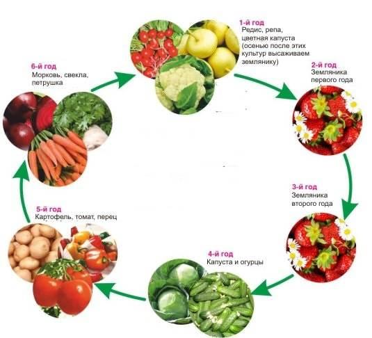 Севооборот овощных культур в огороде на приусадебном участке
